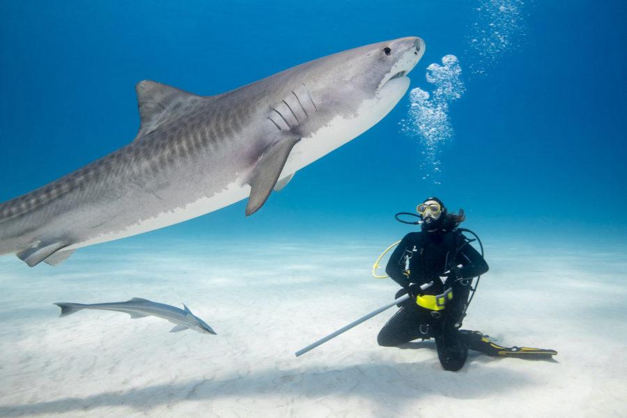 Karwia – spotkanie dzieci z rekinami